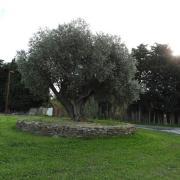 Corneilla del Vercol